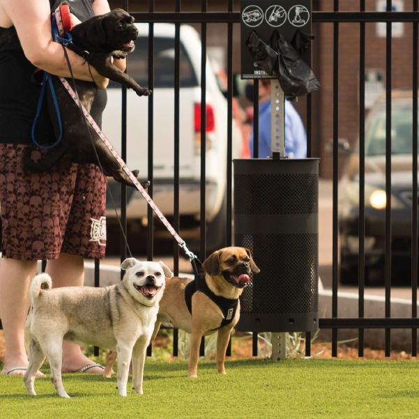 Downtown Dog-Friendly Stops